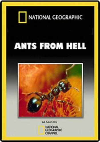 Смотреть онлайн National Geographic. Эти хищные муравьи