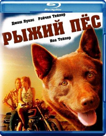 Смотреть онлайн Рыжий пес / Red Dog (2011) фильмы бесплатно