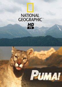 Пума! (2012) HDTVRip онлайн